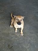 家庭照:老姐家的胖狗狗(來寶)