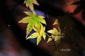 《愛玩足跡》2017.11.22.福壽山賞楓紅:2017.11.22.福壽山拍楓 212.JPG