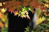 《愛玩足跡》2017.11.22.福壽山賞楓紅:2017.11.22.福壽山拍楓 128.JPG