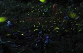 《愛玩足跡》2016.04.24.外拍螢火蟲:2016.04.24.內灣螢火蟲 012.jpg