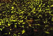 《愛玩足跡》2016.04.24.外拍螢火蟲:2016.04.24.內灣螢火蟲 019.jpg