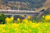 《愛玩足跡》2019.01.21.高鐵火車:2019.01.21.火車與油菜花 041.JPG