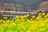 《愛玩足跡》2019.01.21.高鐵火車:2019.01.21.火車與油菜花 056.JPG