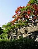 大湖番茄會社鳳凰花:DSC044.JPG