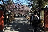 關西賞櫻花行DAY3:接近冰室神社