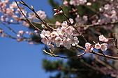 關西賞櫻花行DAY3:奈良一帶花況不錯!