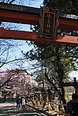 關西賞櫻花行DAY3:冰室神社