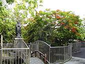 我的學習園地:雨後的操場和充滿濕氣的樹木.jpg