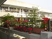 我的學習園地:充滿喜慶的聖誕紅.jpg
