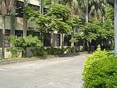 我的學習園地:在風中搖曳的大王椰子樹.jpg
