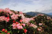 2019.Apr-[南投仁愛] 石門山賞高山杜鵑:12_花團錦簇.JPG
