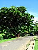 2010.Jul-[屏東恆春、台東蘭嶼] 墾丁森林遊樂區&蘭嶼:008_A Big Tree.JPG