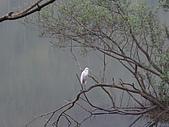 2009.Mar-[宜蘭大同] 太平山:04_湖上白鷺鷥.JPG