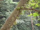 2008.Nov-[南投中寮] 福盛山農場&龍鳳瀑布:31_樹果.JPG
