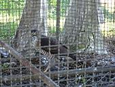 2008.Nov-[南投中寮] 福盛山農場&龍鳳瀑布:21_囚鳥〈It's a eagle〉.JPG