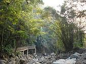 2008.Nov-[南投中寮] 福盛山農場&龍鳳瀑布:33_畫過樹梢的夕陽.JPG