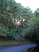 2010.Nov-[南投信義] 麟趾山:35_微光森林.JPG
