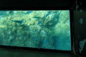 2017.Apr-[日本沖繩] 沖繩:65_魚兒水中游.jpg