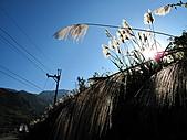 2011.Feb-[苗栗泰安] 洗水坑李花:06_穗穗平安.JPG
