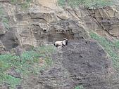 2009.05.May-[台北縣] 平溪、東北角:40_崖上的一支羊.JPG
