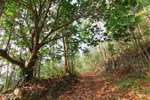 2021.Apr-[台南楠西、東山] 竹子尖山、崁頭山:03_沿途很多落葉.JPG
