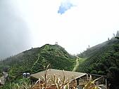 2010.Sep-[南投鹿谷] 樟空崙山:09_據說這片茶園拍過廣告.JPG