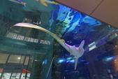 2017.Apr-[日本沖繩] 沖繩:11_AEON MALL裡有個巨大的水族箱,裡面養了兩隻鯊魚.jpg