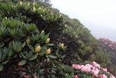 2014.May-[南投仁愛] 合歡山杜鵑:14_還有很多花苞等著下一批旅人.JPG