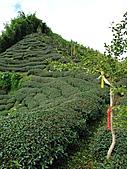 2010.Sep-[南投鹿谷] 樟空崙山:11_山頂就在不遠處〈很有攻頂的Fu〉.JPG