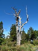 2009.Mar-[宜蘭大同] 太平山:16_A White Tree.JPG