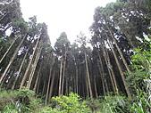 2009.Apr-[南投竹山] 杉林溪:09_杉林溪就該有杉林.JPG