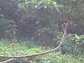 2008.Sep-[高雄茂林] 茂林:02_紅蜻蜓與黑蜻蜓.JPG