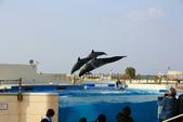 2017.Apr-[日本沖繩] 沖繩:37_跳躍的鯨豚.jpg