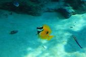 2017.Apr-[日本沖繩] 沖繩:27_狐藍子魚.jpg