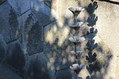 2019.Feb-[台北中山、中正、信義] 臨濟護國禪寺、台北府北門、臺北郵局、台北光之饗宴:03_很別緻的集水器.JPG