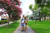 2020.Jun-[台中霧峰] 亞洲大學紫薇花、阿勃勒:04_我們徘迴在紅花與綠樹之間.JPG