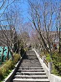 2009.Mar-[宜蘭大同] 太平山:21_紫槭樹夾道.JPG