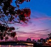 綜合:台南運河鳳凰花t-69.jpg
