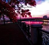 綜合:台南運河鳳凰花t-65.jpg
