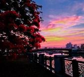 綜合:台南運河鳳凰花t-54.jpg