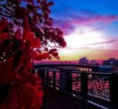 綜合:台南運河鳳凰花t-61.jpg