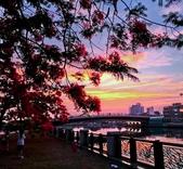 綜合:台南運河鳳凰花t-51.jpg