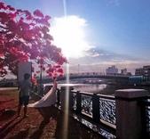 綜合:台南運河鳳凰花t-27.jpg