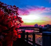 綜合:台南運河鳳凰花t-57.jpg