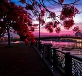 綜合:台南運河鳳凰花t-70.jpg