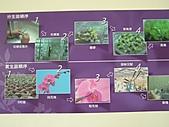 蘇一箱台南喝喜酒訪友之旅:20080206---P025.JPG