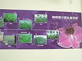 蘇一箱台南喝喜酒訪友之旅:20080206---P026.JPG