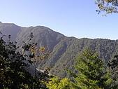 谷關七雄馬崙山挑戰:20090111---P043.JPG
