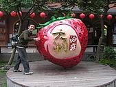 20090419水雲三星鳥嘴山探險:20090419---P036.JPG