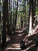 谷關七雄馬崙山挑戰:20090111---P090.JPG